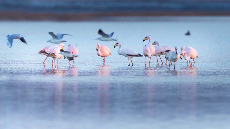 Impulsan la creación del mayor parque nacional del país en la laguna de Mar Chiquita